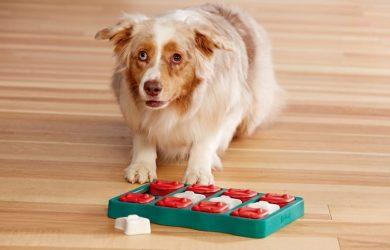 intelligent hondenspeelgoed
