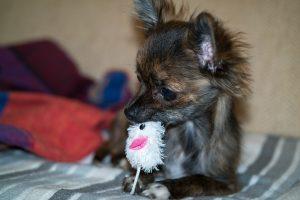 puppy-speelgoed