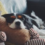 Alles over hondenknuffels voor jouw hond!