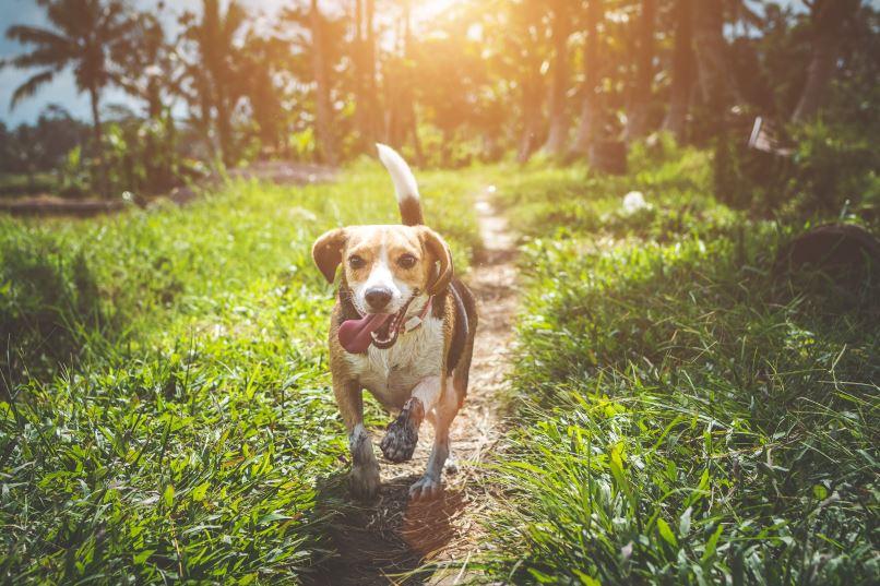 Het effect van hondenspeeltjes op je hond