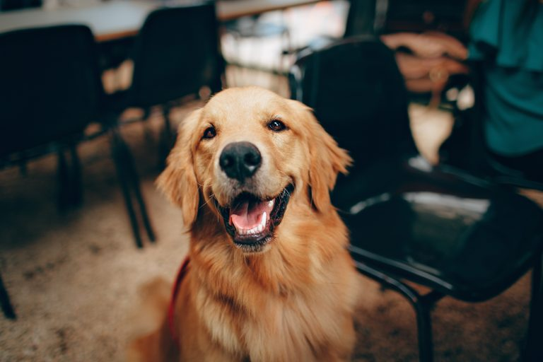 rustige-honden-middelgroot