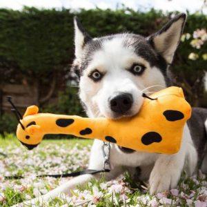 Hondenknuffels