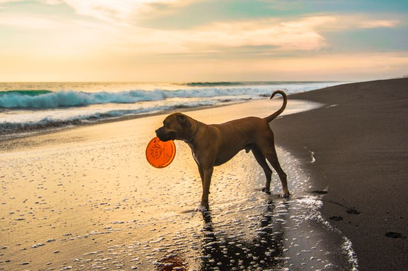 Waterspeelgoed. Hond blij!